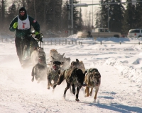 Dogsled%20racing%20Alaska - Authenticity, Congruence and Sled Dogs