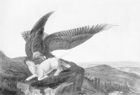 Eagle and Lamb   James Audubon - Anarchy Is Not a Disorder: A Critique of James Hillman