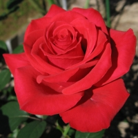 Rosa Red Chateau01%20wiki - The Role of Beauty in Building Resiliency: Seeing Beyond the Problem
