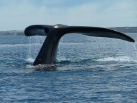 Tail of a whale near Valdes Peninsula - Waxing Existential: Time to Choose