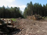 Tree harvesting   geograph.org .uk   518048 - Shredding