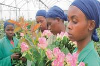 kenyan flower growers320 - Why Economic Growth is the Wrong Focus for Africa (Part 2)